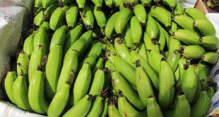 پخش عمده میوه